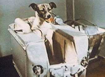 Laika The First Space Dog